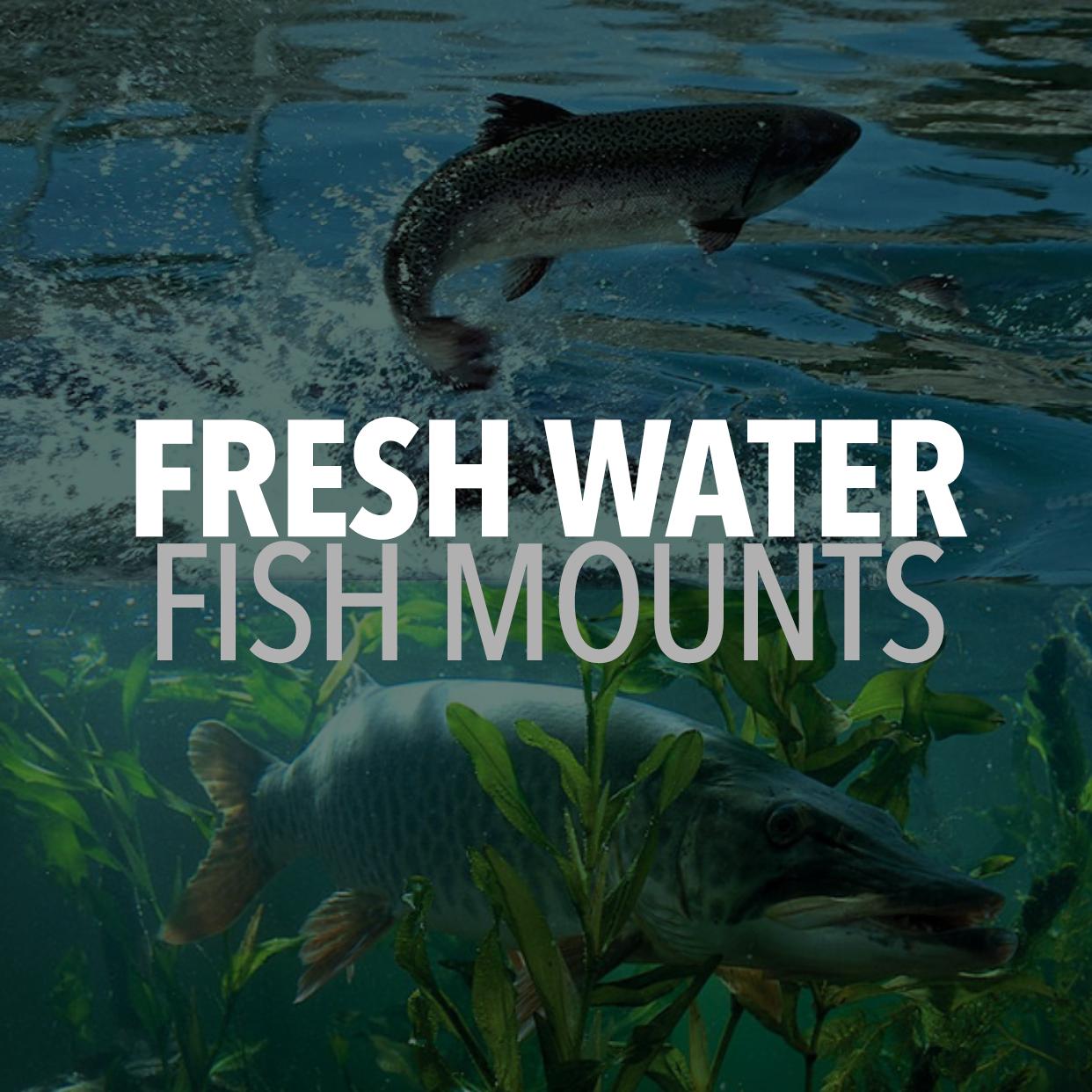Freshwater fishmounts | Mounted fish | Fish replicas | Fish ...