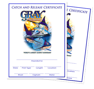 Catch and Release Certificate from Gray Taxidermy