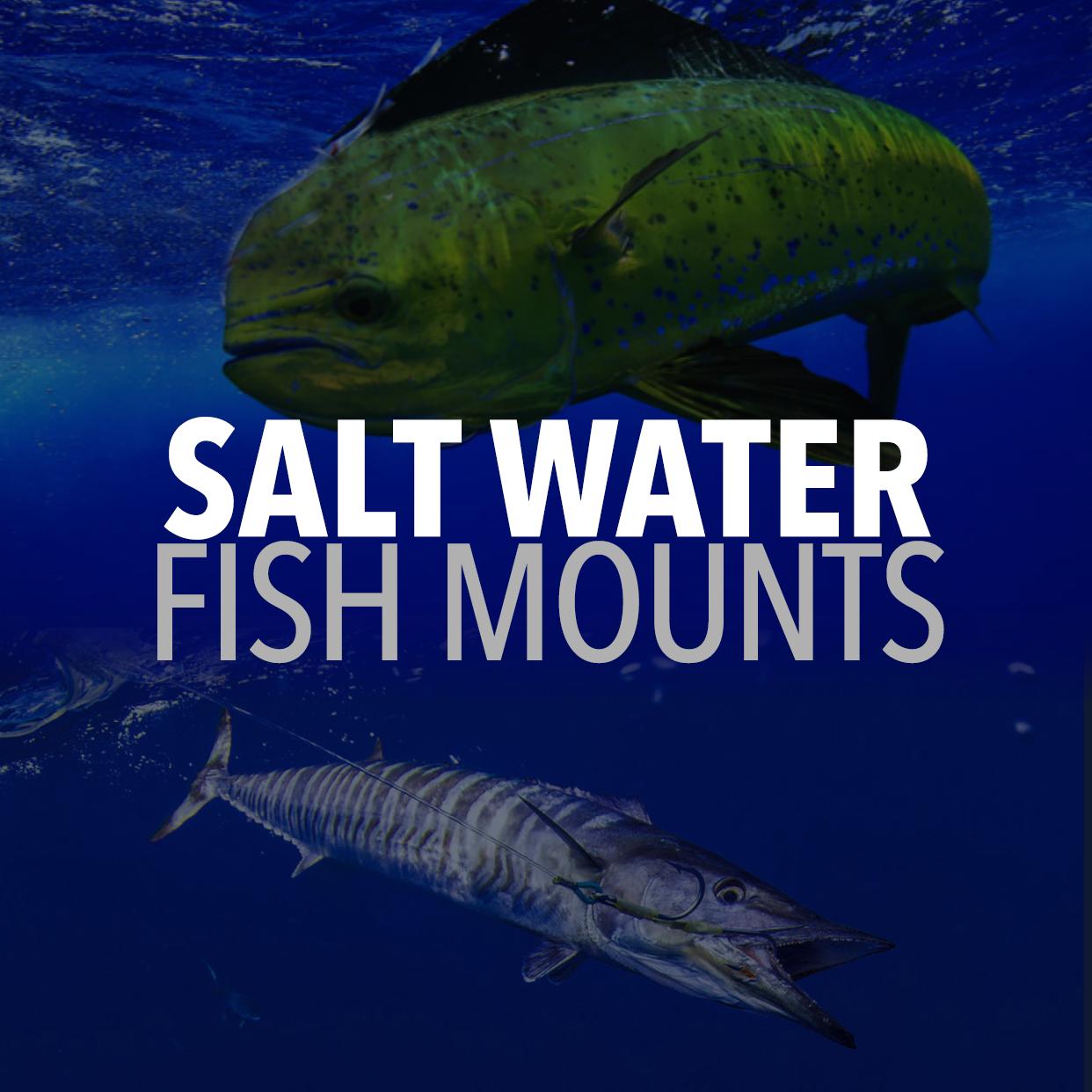 Saltwater fishmounts | Freshwater fishmounts | Mounted fish | Fish