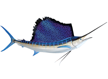 Atlantic Sailfish Fismount