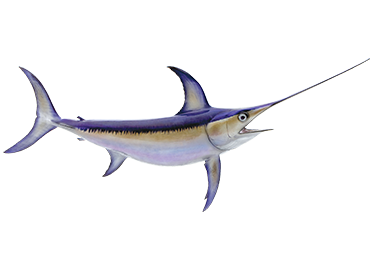 Swordfish Fishmount
