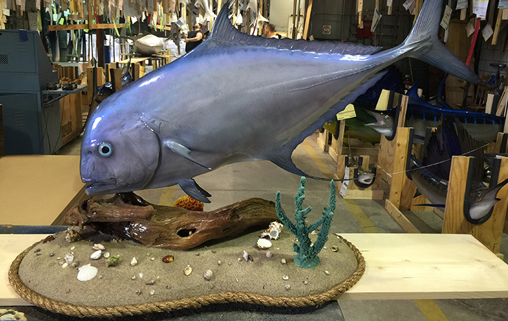 African Pompano fish trophy alternative