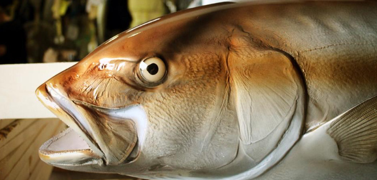 Amberjack fish replica mount