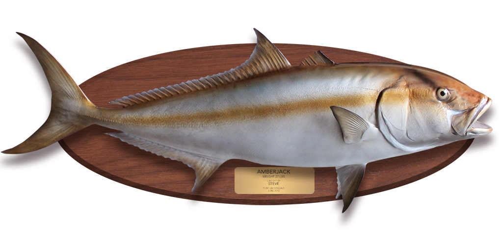Amberjack fishmount on wood plaque