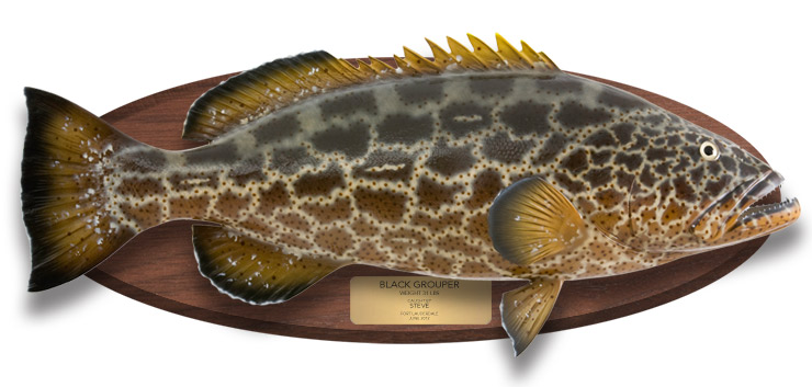 Black Grouper Fish Replica on wood plaque