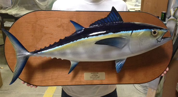 Bluefin Tuna on wood plaque