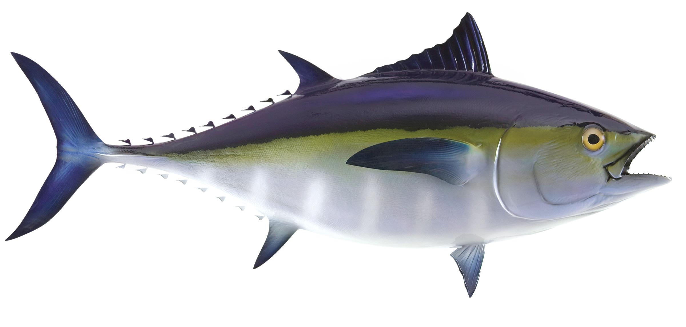 Bluefin Tuna Fish Replica Mounted Fish Fish Trophy