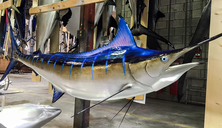 Blue Marlin fish Replica at the shops of Gray Taxidermy