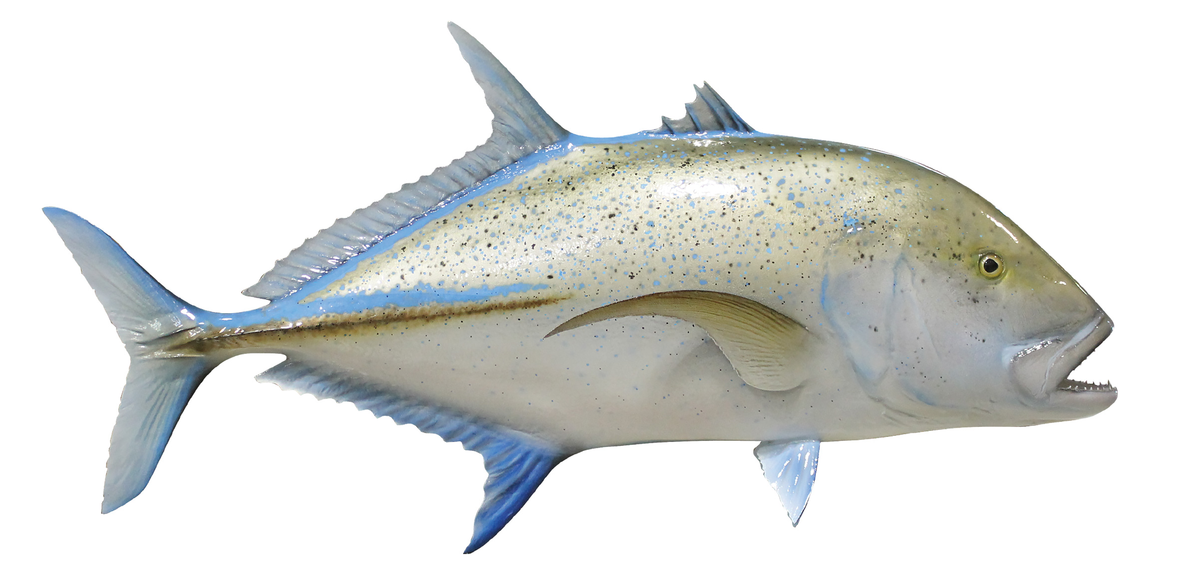 Bluefin trevally fish replica mounted spearfish for Photos of fish