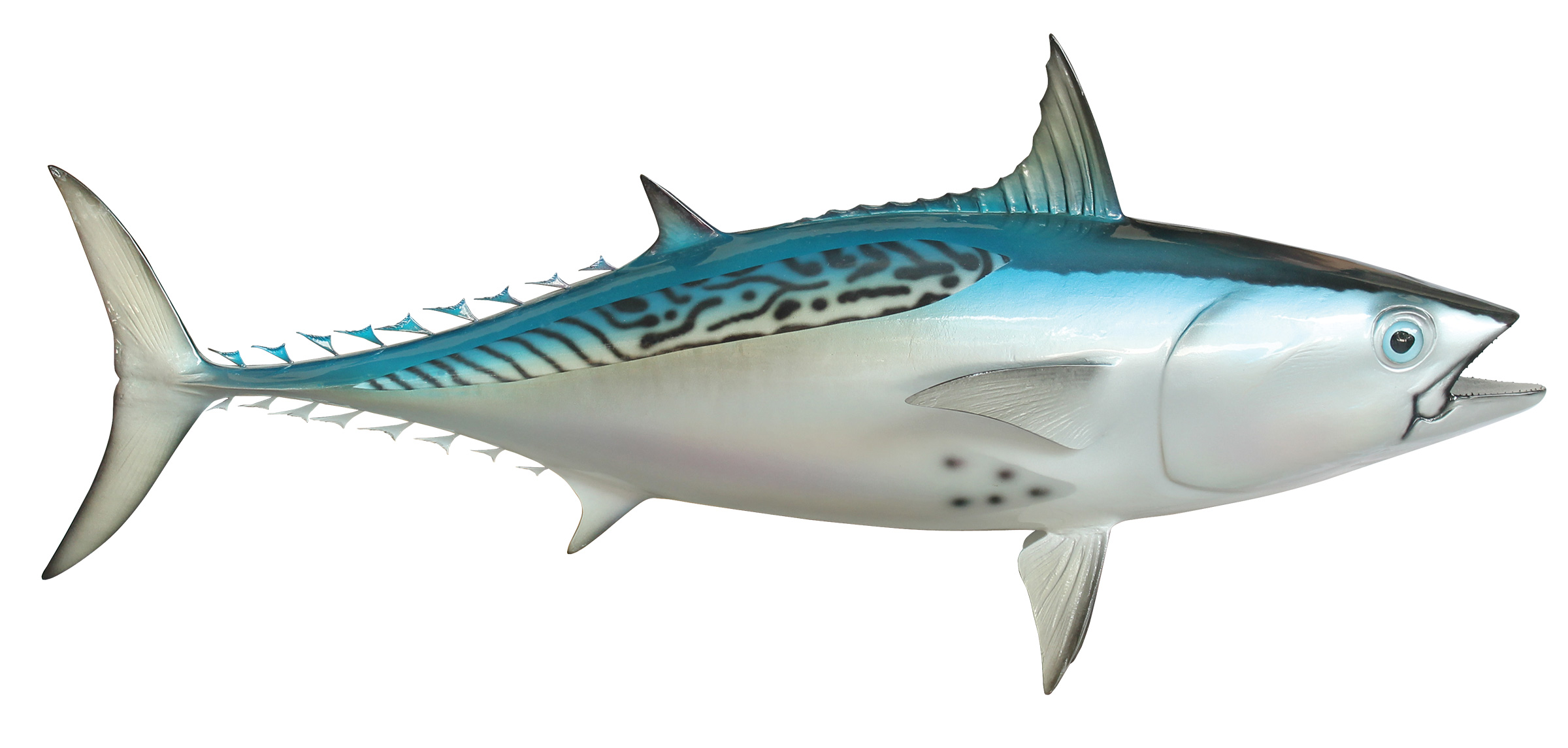 Bonito tuna fish replica mounted fish fish trophy for Fish without scales