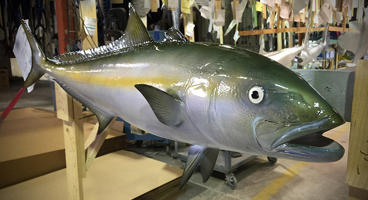California Yellowtail