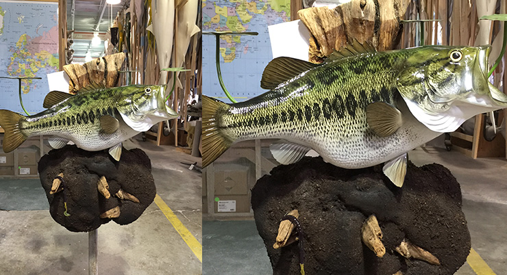 Custom Creations Gallery Mounted Fish Fish Trophies