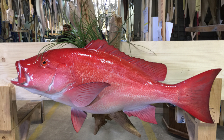 Red Snapper mount
