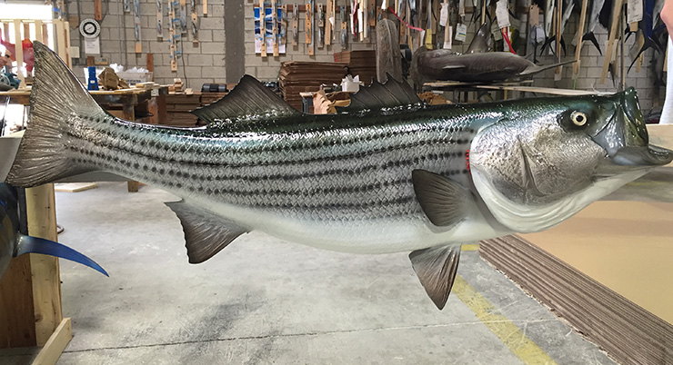 Custom Creations Gallery Two Mounted Fish Fish Trophy