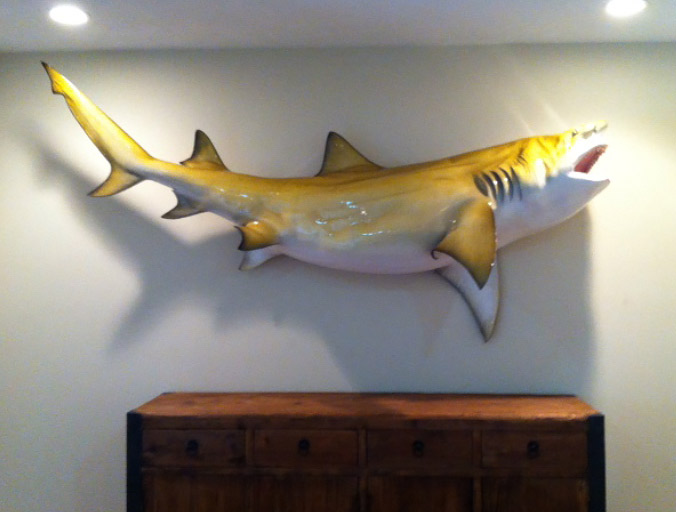 Lemon Shark Mount