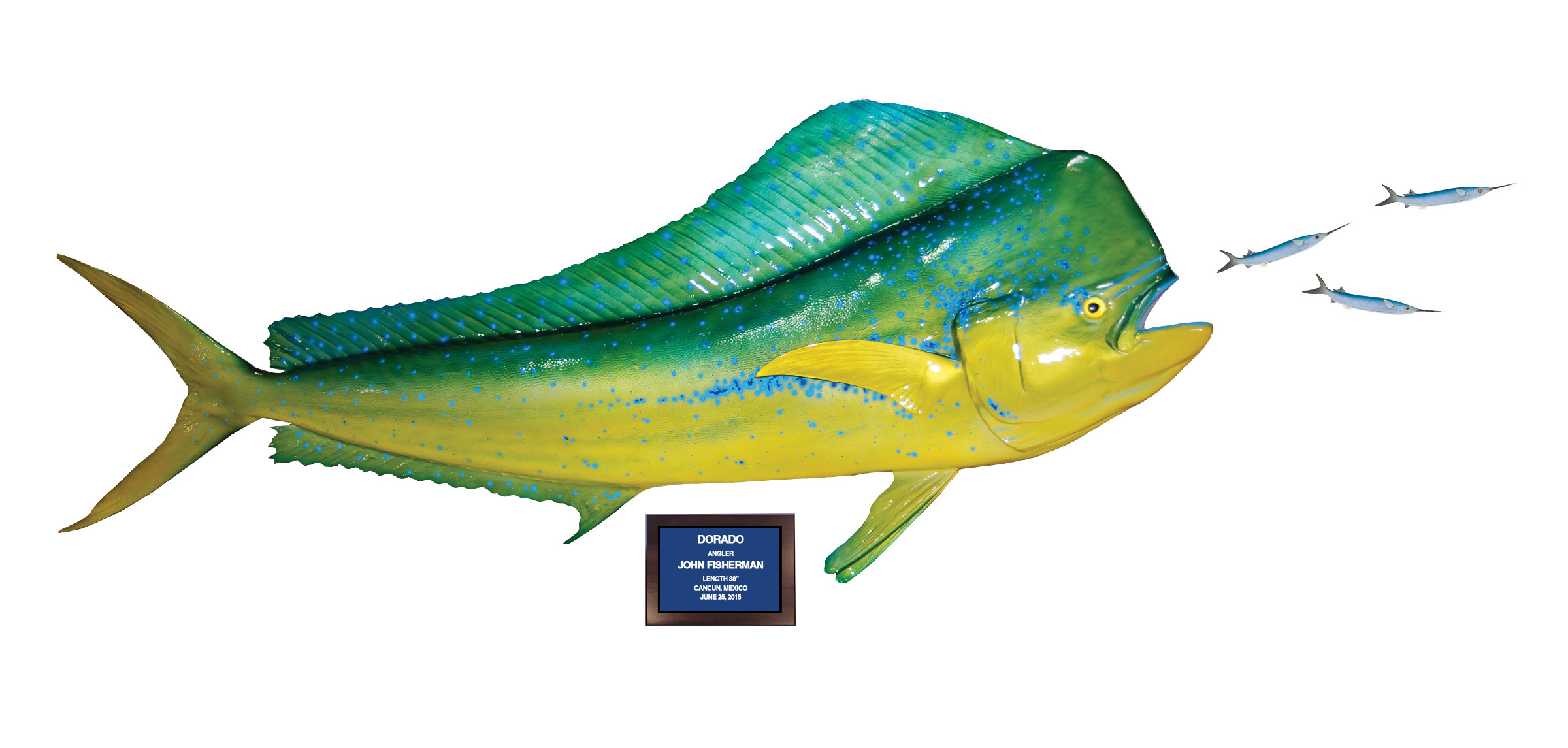 Baitfish mount action scene gallery mounted fish fish for Photos of fish