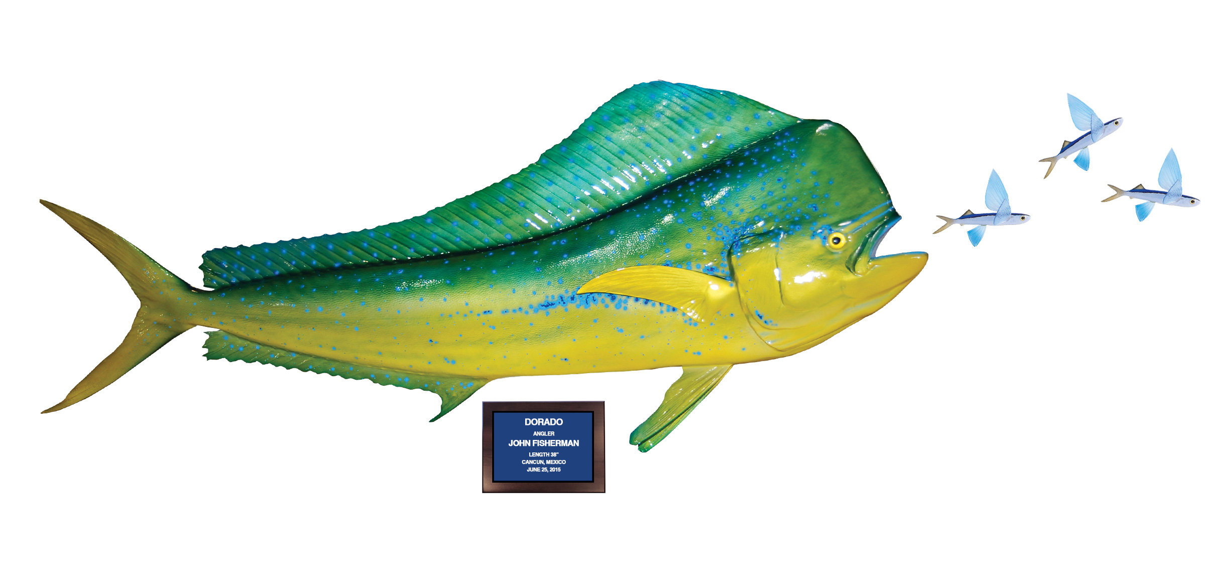 Baitfish mount action scene gallery mounted fish fish for The flying fish