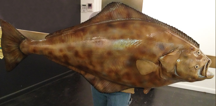 Halibut Fishmount