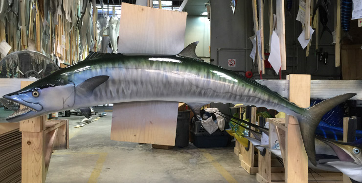 King Mackerel mount down curve