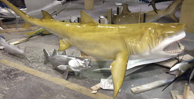 Lemon Shark by Gray Taxidermy