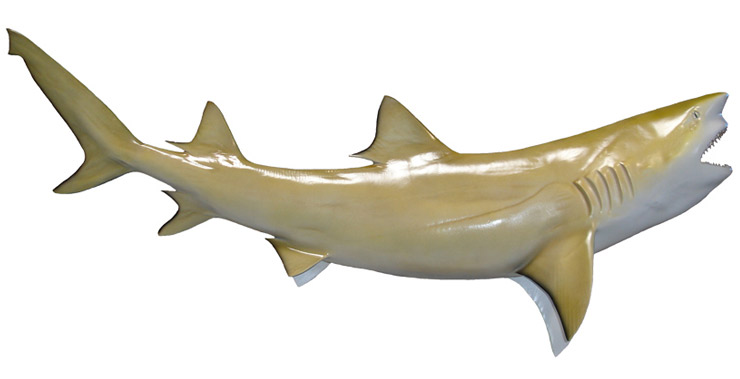 Lemon Shark Fish Replica
