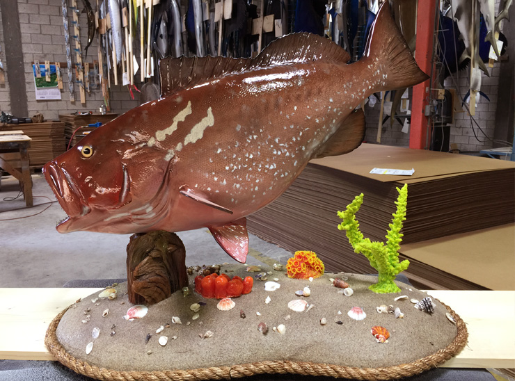 Red Grouper fishmount on a custom base