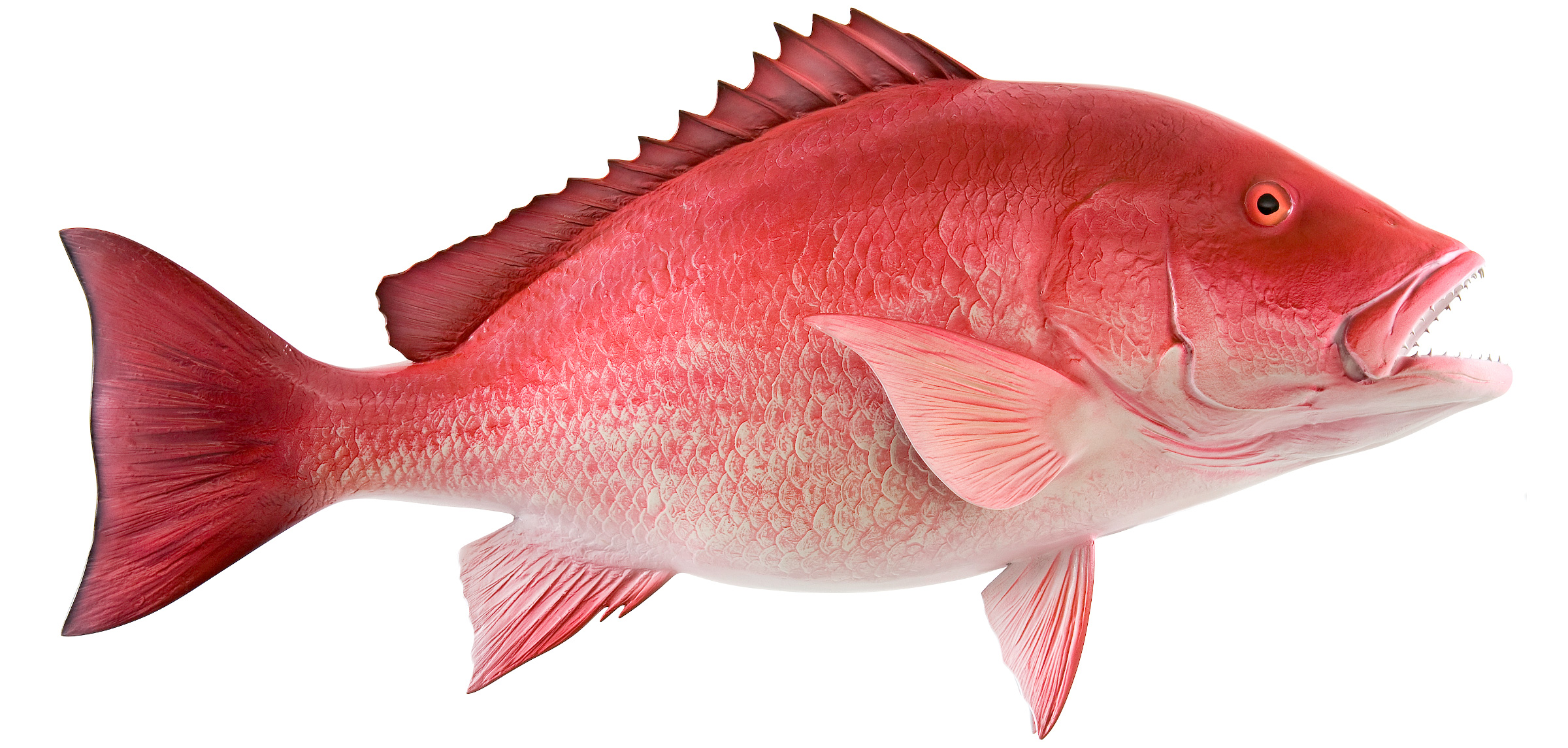 Red Snapper Fish Mount | mounted fish | fish trophy