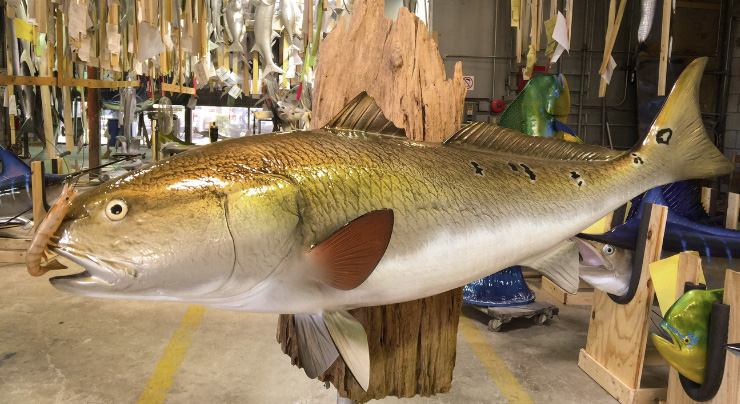Redfish mount at Gray Taxidermy