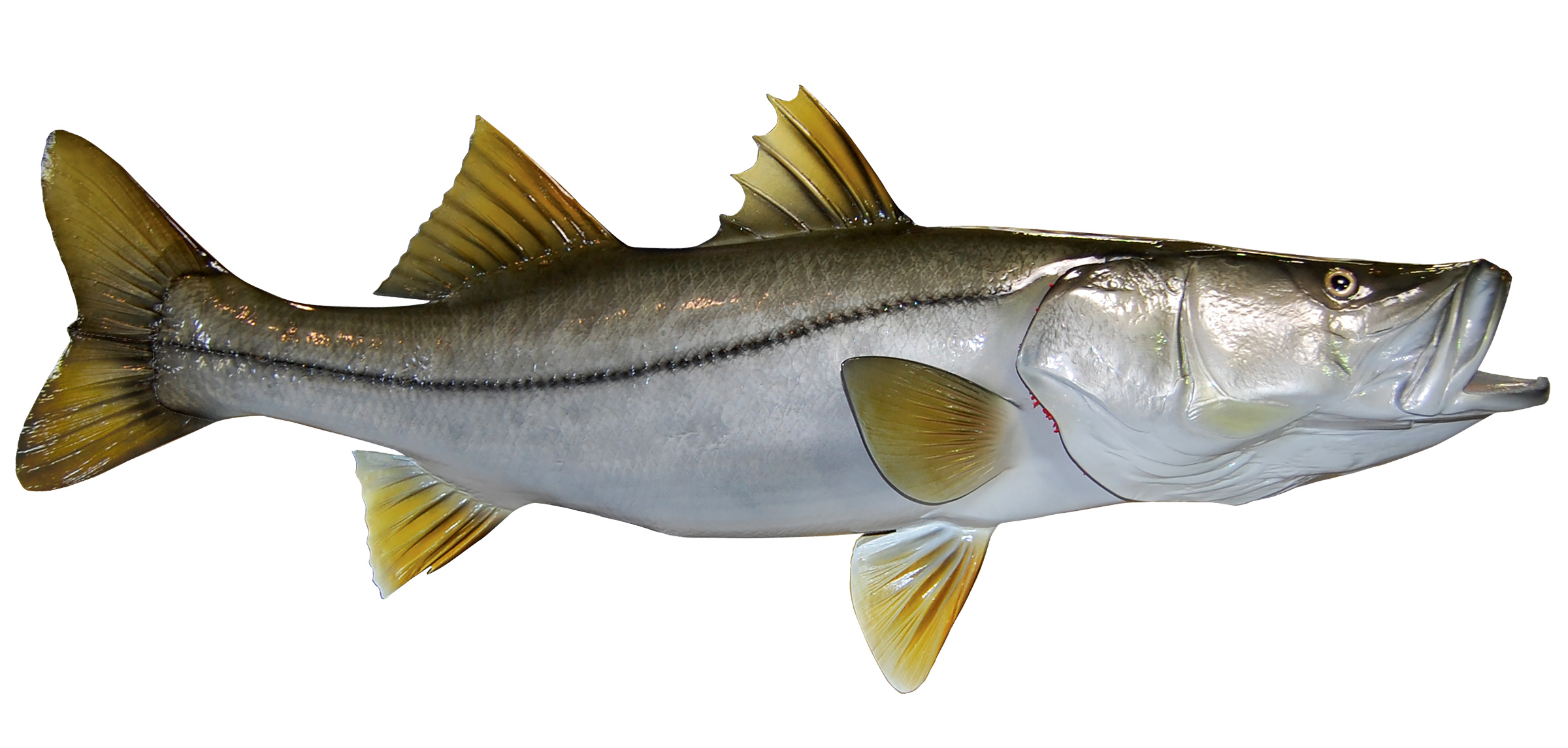 Image gallery snook for Fishing for snook