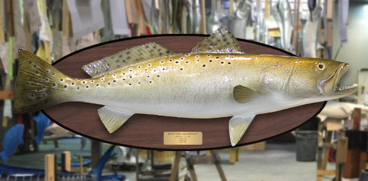 Spotted Seatrout fish mount on wood plaque