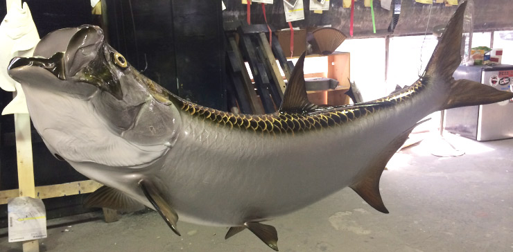 Tarpon fish mount on custom wood panel