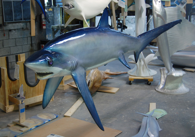 Thresher Shark mount from Gray Taxidermy
