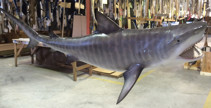 Tiger Shark Replica close up
