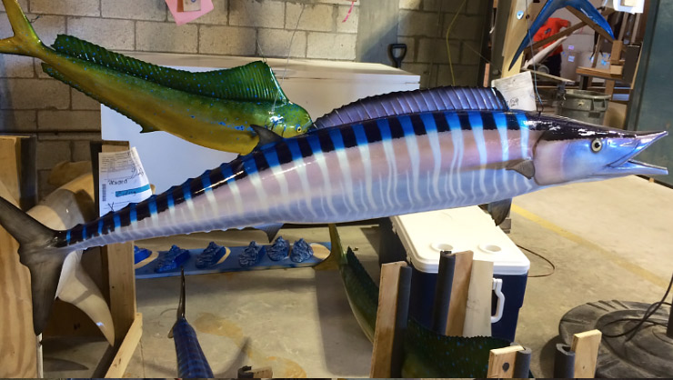 Wahoo fish mount Down Curve