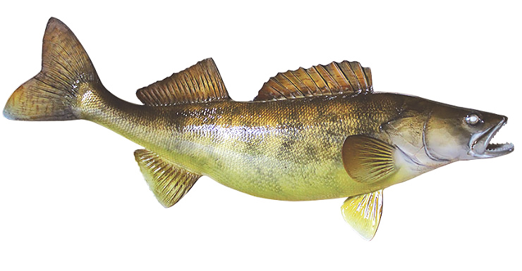 Walleye fishmount