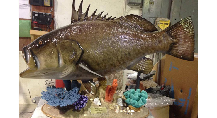 Warsaw Grouper fishmount on a custom base