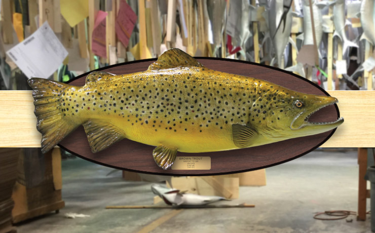 Brown Trout Fishmount with wood plaque