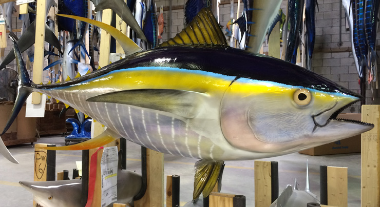 yellowfin tuna fish replica mounted fish fish trophy no shark fin logo Shark Fin Cartoon