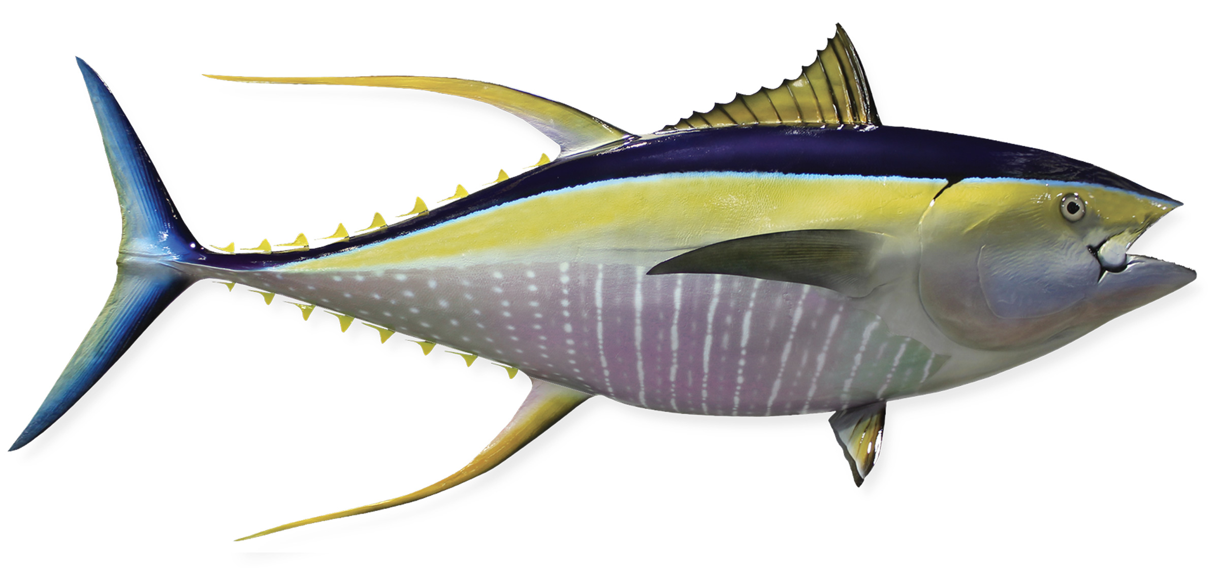 Yellowfin Tuna Fish Replica