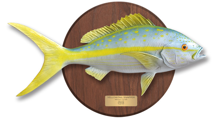 Yellowtail Snapper Fishmount on wood plaque