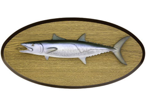 Wood Plaque Mounts Gallery Mounted Fish Fish Trophy