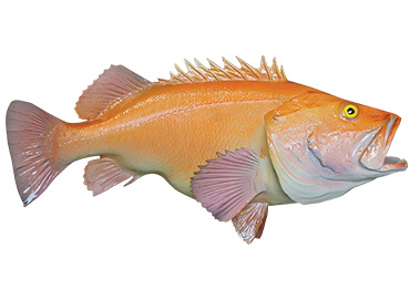 Yelloweye Rockfish mount