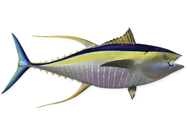 Yellowfin Tuna Fishmount