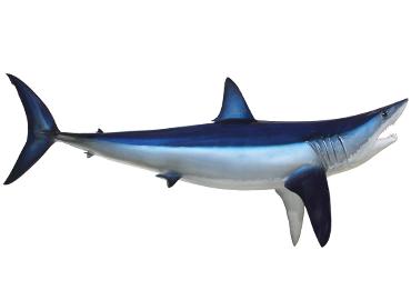 Shark mounts fishmounts mounted fish fish replicas fish mako shark altavistaventures Images