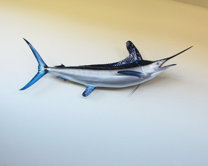 White Marlin from Gray Taxidermy