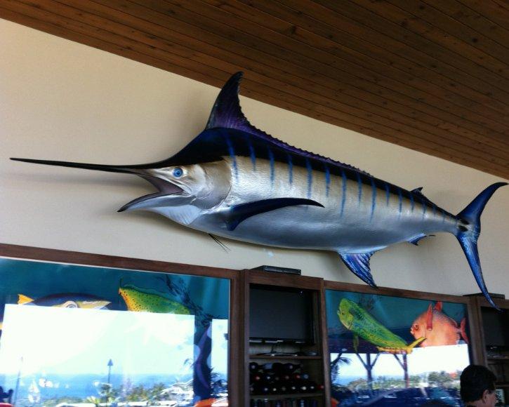 Blue Marlin at Restaurant from Gray Taxidermy