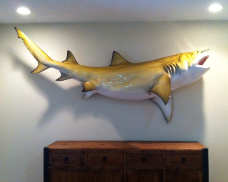 Lemon shark from Gray Taxidermy