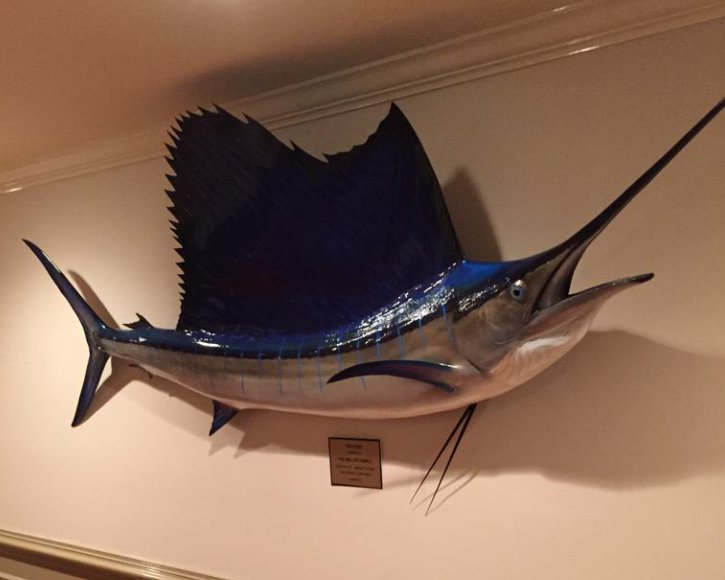 Sailfish from Gray Taxidermy