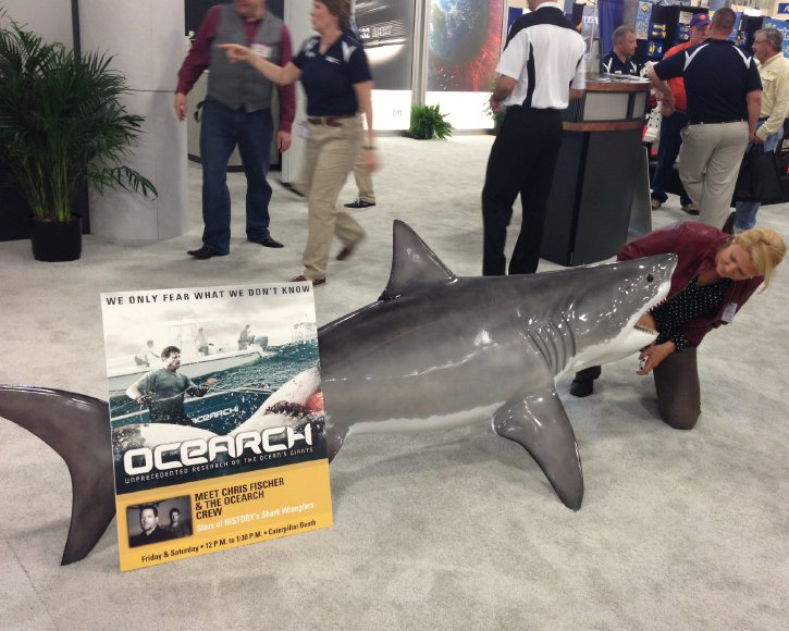 Osearch Great White Shark from Gray Taxidermy