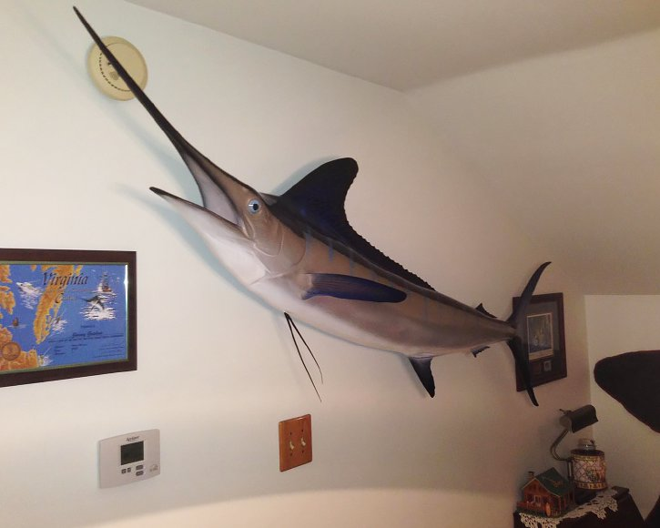 Striped Marlin from Gray Taxidermy